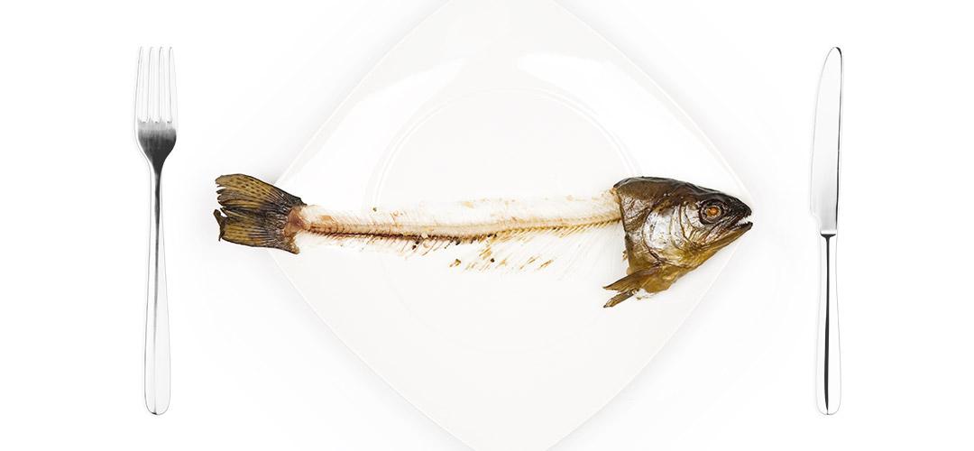fishbudget